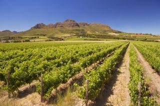 Weinbau Südafrika