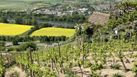 Wein Franken