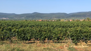 Pfalz Weinanbaugebiet