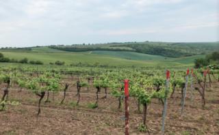 Weinviertel Weinanbaugebiet Österreich